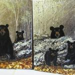 Bear Foot 2 and Under a Watchful Eye as a pair of paintings